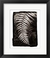 Fern II Framed Print