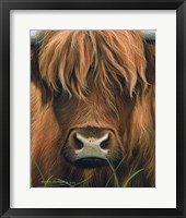 Framed Cow Portrait