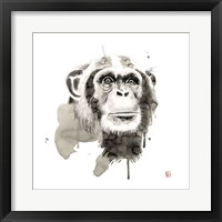 Framed Chimp