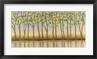 Framed Canopy of Trees
