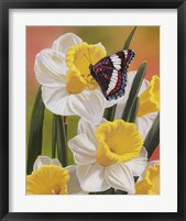 Framed Daffodils & Butterfly