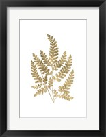 Framed Graphic Gold Fern II
