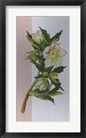 Framed Flower Repose II