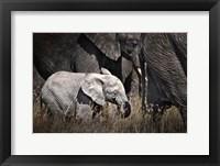 Framed Baby Elephant I