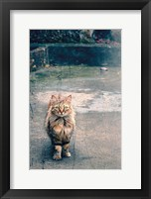 Framed Eyes of the Sicilian Cat Italy