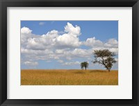 Framed Kenya Tree