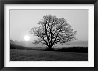 Framed Meadow Tree