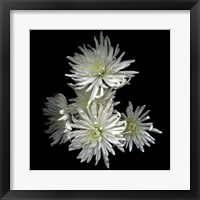 Framed Corsage - Chrysanthemums