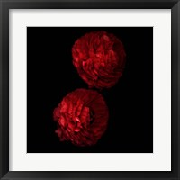 Framed Red And More Red - Ranunculus