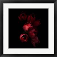 Framed Red Tulips 4