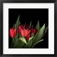 Framed Red Tulips 5
