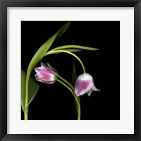 Framed To Love And Protect - Tulips