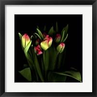 Framed Tulips 1