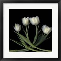 Framed Tulips 3