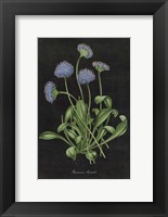 Framed Botanical on Black Chart VII