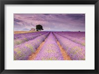 Framed Stone House in Lavender Field