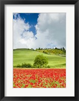 Framed Tuscan Poppies - Vertical
