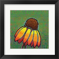Framed Coneflower