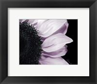 Hints of Lavender Framed Print