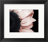 Whisper of Pink Framed Print