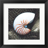 Nautilus with Net Framed Print