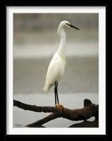 Framed Egret
