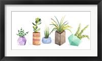 Framed Succulent Display I