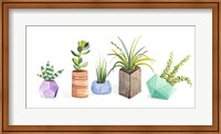 Framed Succulent Display I