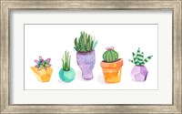 Framed Succulent Display II