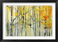 Framed Autumn Birches