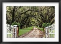 Framed Plantation Road