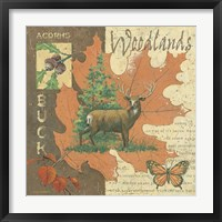 Woodlands Buck Framed Print