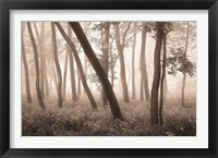 Framed Reticent Woods