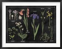 Botanical Floral Chart II Black and White Framed Print