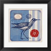Framed Sea Bird I