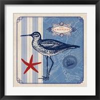 Framed Sea Bird II