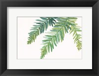 Framed Ferns I Square