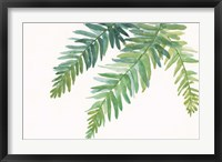 Ferns I Square Framed Print