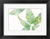 Framed Ferns I Square