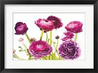 Framed Spring Ranunculus III