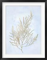Gold Foil Algae II on Blue - Metallic Foil Framed Print