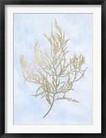 Gold Foil Algae III on Blue - Metallic Foil Framed Print