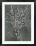 Silver Foil Algae I on Black - Metallic Foil Framed Print