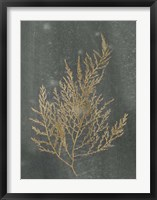 Gold Foil Algae II on Black - Metallic Foil Framed Print