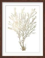 Framed Gold Foil Algae I - Metallic Foil