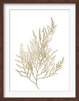 Framed Gold Foil Algae II - Metallic Foil