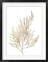 Gold Foil Algae II - Metallic Foil Framed Print