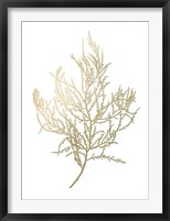 Gold Foil Algae III - Metallic Foil Framed Print