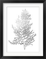 Framed Silver Foil Algae IV - Metallic Foil