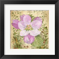 Framed Vintage Apple Blossom II